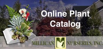 Millican Nursary Plant Catolog