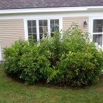Landscape renovation Laconia New hampshire