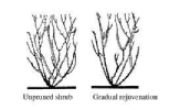 Proper Pruning Illustration